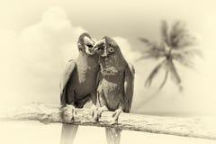 Παπαγάλος & x28 Αυστηρό Macaw& x29  στον κλάδο στο τροπικό υπόβαθρο Τρύγος Στοκ Εικόνες
