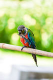 Παπαγάλος, ζωηρόχρωμος παπαγάλος, παπαγάλος Macaw, ζωηρόχρωμο macaw Στοκ εικόνες με δικαίωμα ελεύθερης χρήσης
