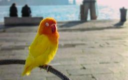 παπαγάλος κίτρινος Στοκ Εικόνες