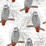 παπαγάλος πρότυπο άνευ ραφής Στοκ φωτογραφία με δικαίωμα ελεύθερης χρήσης