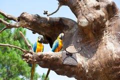 Παπαγάλος σε ένα δέντρο Στοκ εικόνα με δικαίωμα ελεύθερης χρήσης