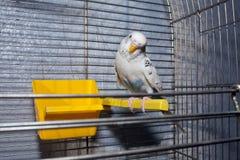 Παπαγάλος σε μια πέρκα Στοκ φωτογραφία με δικαίωμα ελεύθερης χρήσης