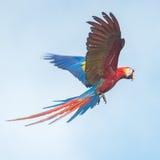 Παπαγάλος στον ουρανό Στοκ εικόνες με δικαίωμα ελεύθερης χρήσης