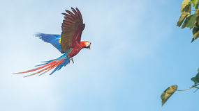 Παπαγάλος στον ουρανό Στοκ Εικόνα