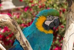 Παπαγάλος στο δέντρο που κοιτάζει κατά μέρος Στοκ Εικόνες