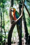 Παπαγάλος στο δέντρο Στοκ εικόνες με δικαίωμα ελεύθερης χρήσης