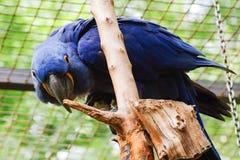 Παπαγάλος, φιλικά ζώα στο ζωολογικό κήπο της Πράγας Στοκ Φωτογραφίες