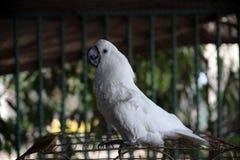 παπαγάλος Στοκ Φωτογραφία