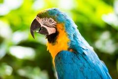 Παπαγάλος macaw, κινηματογράφηση σε πρώτο πλάνο σε ένα πράσινο υπόβαθρο Στοκ φωτογραφία με δικαίωμα ελεύθερης χρήσης
