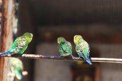 Παπαγάλος macaw στοκ εικόνες με δικαίωμα ελεύθερης χρήσης