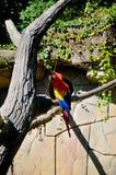 Παπαγάλος Macaw Στοκ φωτογραφίες με δικαίωμα ελεύθερης χρήσης