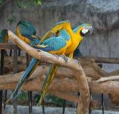 Παπαγάλος Macaw Στοκ Εικόνα