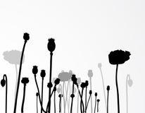 παπαρούνα χλόης πεδίων κα&lambd Στοκ εικόνες με δικαίωμα ελεύθερης χρήσης