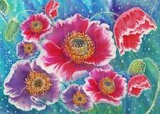 Παπαρούνες - λουλούδια και οφθαλμοί Στοκ εικόνες με δικαίωμα ελεύθερης χρήσης