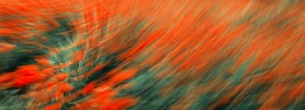 παπαρούνες πεδίων Στοκ εικόνα με δικαίωμα ελεύθερης χρήσης