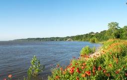 Παπαρούνες στην ακτή ποταμών Στοκ Εικόνες