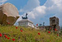 Παπαρούνες στη Ρώμη στοκ φωτογραφία