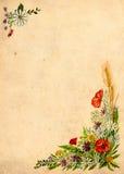 παπαρούνες Στοκ φωτογραφία με δικαίωμα ελεύθερης χρήσης