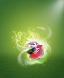 Παπούτσια αντισφαίρισης στοκ φωτογραφίες με δικαίωμα ελεύθερης χρήσης