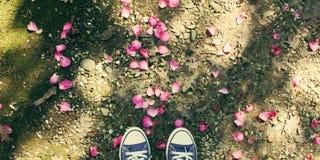 Παπούτσια νεαρών άνδρων και λουλούδια πετάλων στοκ εικόνα