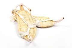 Παπούτσια χλόης στην άσπρη ανασκόπηση Στοκ εικόνα με δικαίωμα ελεύθερης χρήσης