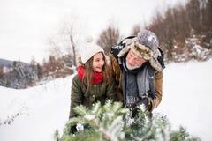Παππούς και μικρό κορίτσι που παίρνουν ένα χριστουγεννιάτικο δέντρο στο δάσος Στοκ Εικόνες