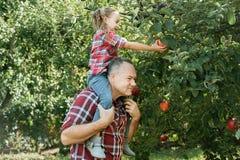 Παππούς με την εγγονή με τη Apple στον οπωρώνα της Apple Στοκ Εικόνα