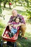 Παππούς με την εγγονή με τη Apple στον οπωρώνα της Apple Στοκ Φωτογραφίες