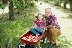 Παππούς με την εγγονή με τη Apple στον οπωρώνα της Apple Στοκ φωτογραφία με δικαίωμα ελεύθερης χρήσης