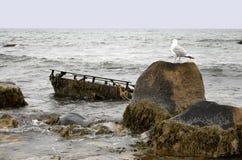 παράβλεψη seagull των συντριμμιών Στοκ φωτογραφία με δικαίωμα ελεύθερης χρήσης