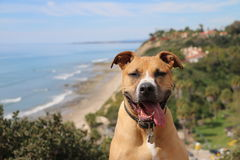 Παράβλεψη της παραλίας σκυλιών Στοκ Φωτογραφίες