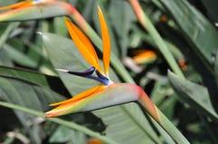 παράδεισος λουλουδιών πουλιών Στοκ εικόνες με δικαίωμα ελεύθερης χρήσης