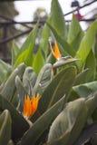 παράδεισος πουλιών Στοκ Εικόνες