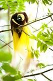 παράδεισος πουλιών Στοκ εικόνα με δικαίωμα ελεύθερης χρήσης