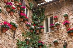 Παράθυρα Assisi με τις σε δοχείο εγκαταστάσεις και τον κισσό Στοκ Εικόνα
