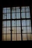 Παράθυρο γυαλιού Στοκ Εικόνα