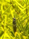 Παράθυρο-η μύγα 3 στοκ φωτογραφία με δικαίωμα ελεύθερης χρήσης