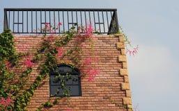Παράθυρο και λουλούδι Στοκ Φωτογραφία