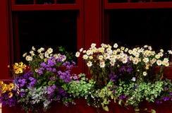 παράθυρο κιβωτίων Στοκ Φωτογραφίες