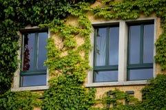 παράθυρο κισσών Στοκ Εικόνες