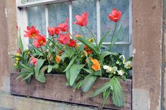 παράθυρο λουλουδιών κ&iot Στοκ Εικόνα