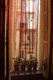 Παράθυρο με την κόκκινη κουρτίνα Στοκ εικόνες με δικαίωμα ελεύθερης χρήσης