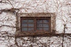 Παράθυρο με τον κισσό Στοκ φωτογραφία με δικαίωμα ελεύθερης χρήσης