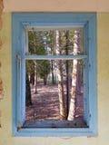 Παράθυρο με το μπλε πλαίσιο και τις απόψεις των δέντρων στοκ εικόνες