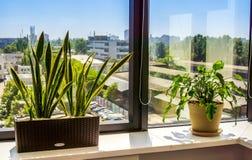 Παράθυρο με flowerpot Στοκ Εικόνες