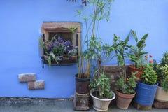 Παράθυρο παλαιά σπίτια στην πόλη Ribeauville στην Αλσατία Γαλλία στοκ εικόνες