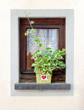 Παράθυρο που διακοσμείται με το δοχείο λουλουδιών στο καλοκαίρι Στοκ Εικόνες