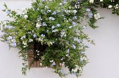Παράθυρο που καλύπτεται με τα λουλούδια Στοκ Εικόνες