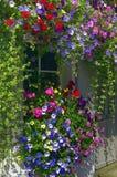 Παράθυρο που πλαισιώνεται μικρό με τα χρωματισμένα άνθη Στοκ Φωτογραφία