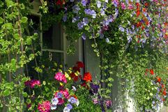 Παράθυρο που πλαισιώνεται μικρό με τα χρωματισμένα άνθη Στοκ Φωτογραφίες